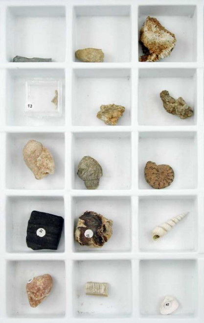 Stratigraphic Fossil Collection, 45 specimens