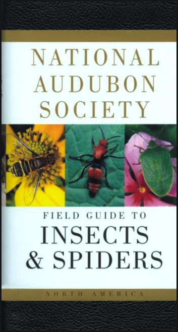 Insects & Spiders Audubon Guide