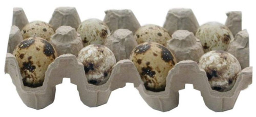 Quail Eggs, Fertilized, 8 pack