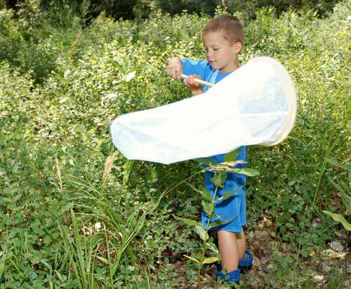 Standard Insect Net