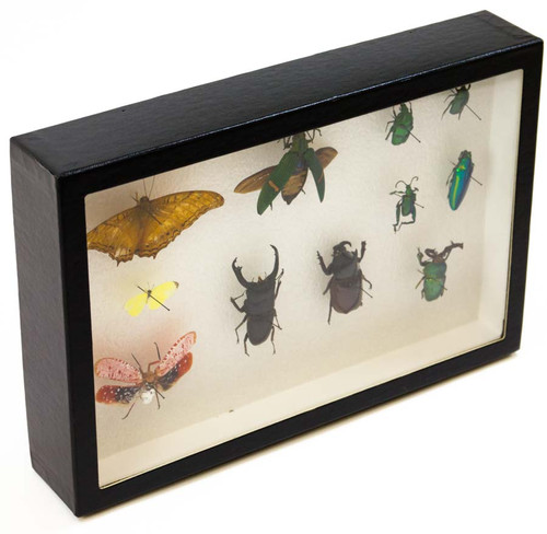 "Insect Exhibit Case 8"" x 12"""