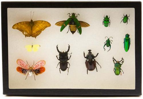 "Insect Exhibit Case 8"" x 12"""
