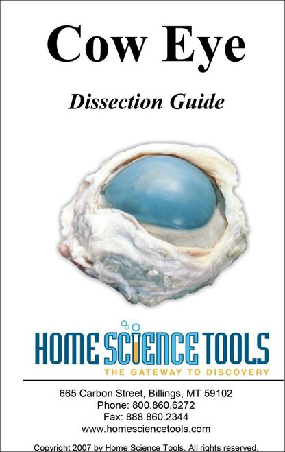 Eye Dissection Guide