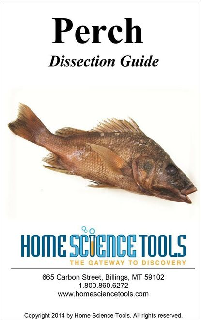 Perch Dissection Guide
