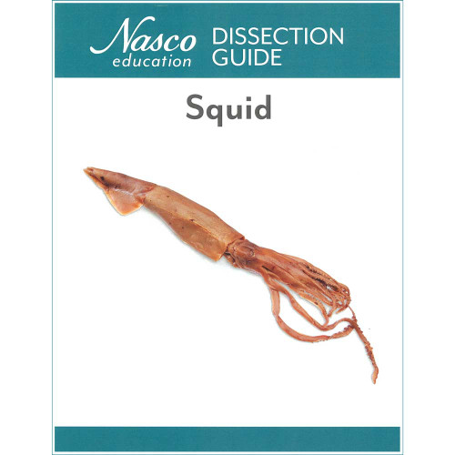 Squid Dissection Guide