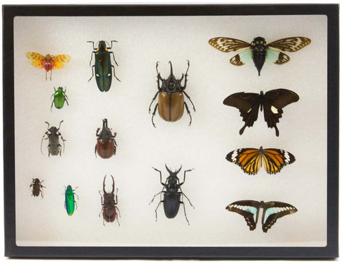 "Insect Exhibit Case 12"" x 16"""