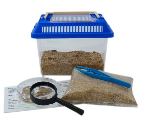 Beetle Life Cycle Kit