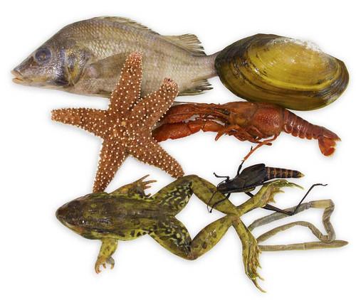 Animal Specimen Set of 7, Large