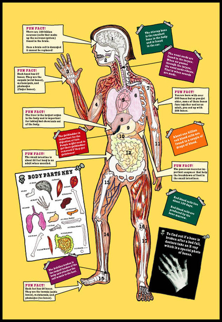 The Magic School Bus A Journey into the Human Body