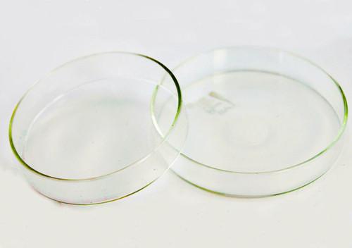 Petri Dish, glass, 100 x 20 mm