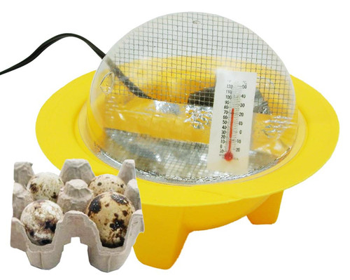 Chick Bator Egg Incubator with Four Eggs