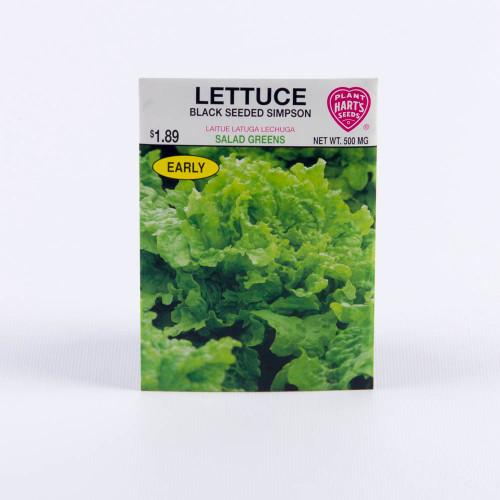 Seeds, leaf lettuce