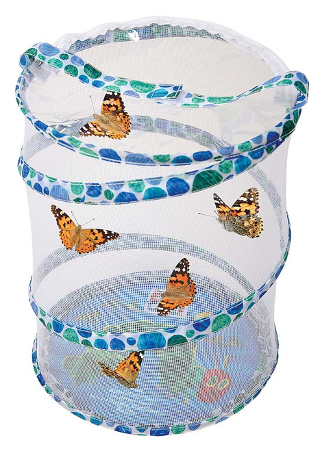 The Very Hungry Caterpillar Butterfly Growing Kit