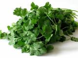 Cilantro Leaf Extract