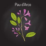 Pau d' Arco Bark Extract
