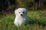 Natural Parasite Prevention for Dogs