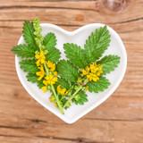 Agrimony Herb Extract