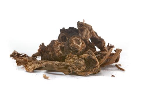 Osha Root Extract