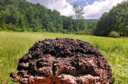 CHAGA Mushroom Extract - Catskill Fungi - 2 fluid ounces