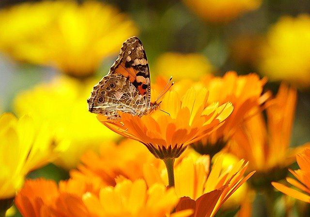 butterfly-196745-640.jpg