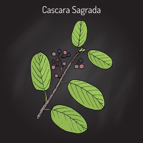 cascara-sagrada-dreamstime-xs-89788636.jpg