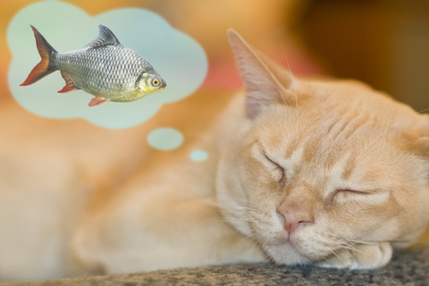 cat-dreaming-dreamstime-xs-16968764.jpg
