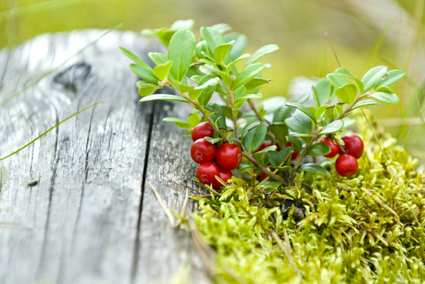 cranberries-outside-green-dreamstime-xs-10899820.jpg