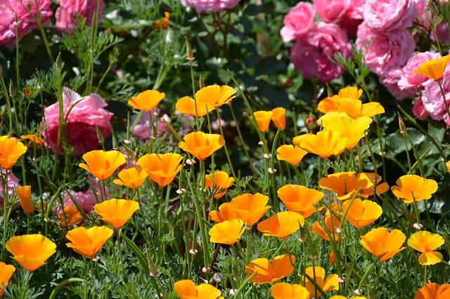 flower-garden-883506-640.jpg