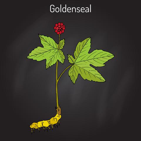 goldenseal-dreamstime-xs-89788153.jpg