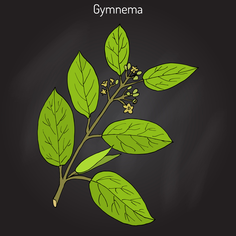 gymnema-dreamstime-xs-89755945.jpg