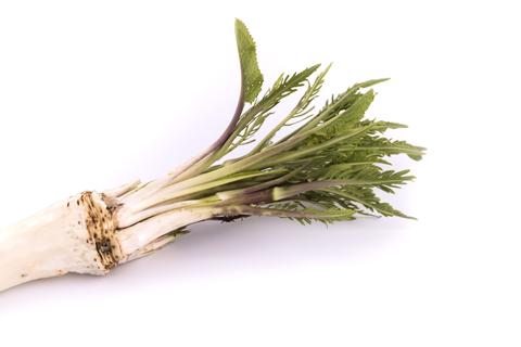 horseradish-dreamstime-xs-90634506.jpg