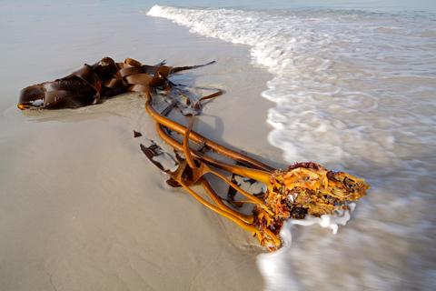 kelp-dreamstime-xs-10559516.jpg