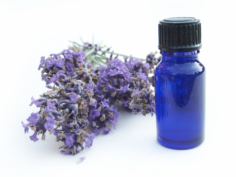 lavender-dreamstime-xs-169445.jpg