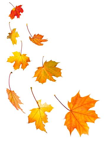 leaves-dreamstime-xs-6669401.jpg