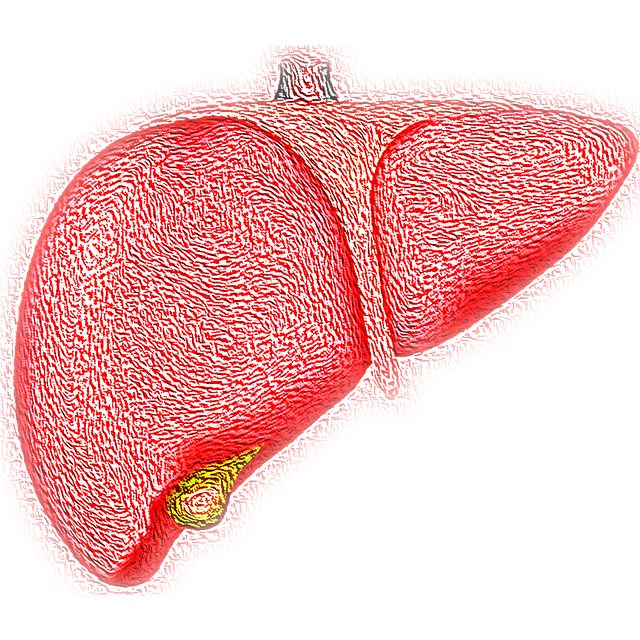 liver-4081243-640.png