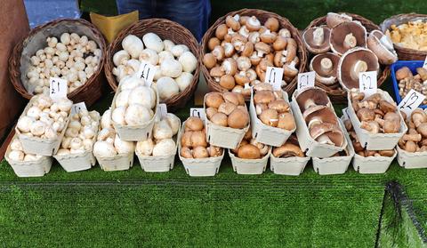 mushroomsdreamstime-xs-42699955.jpg