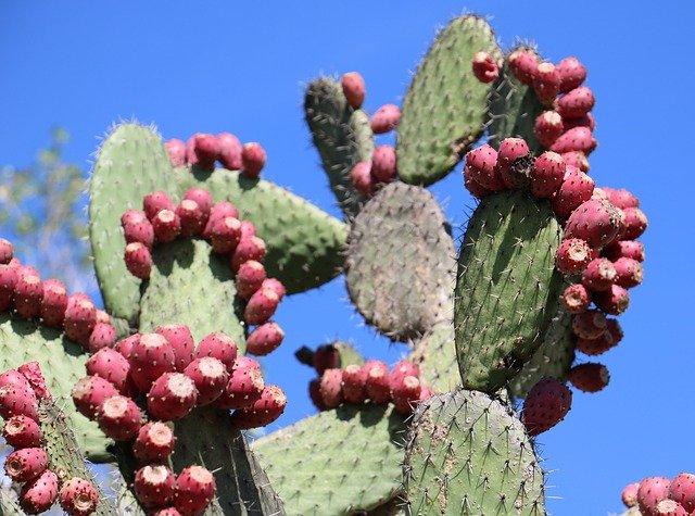 nopal-cactus-949234-640.jpg