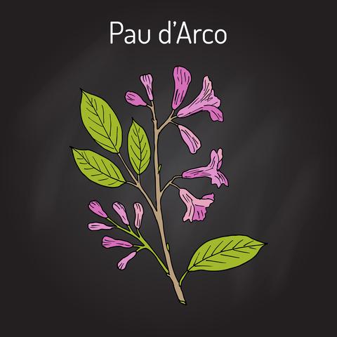 pau-darco-dreamstime-xs-89788626.jpg
