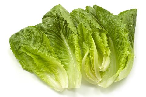 romaine-lettucedreamstime-xs-15594426.jpg