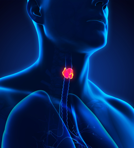 thyroid-man-dreamstime-xs-70825691.jpg