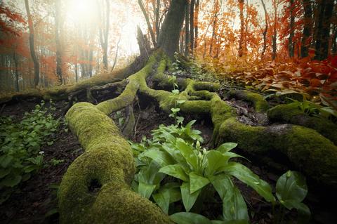 tree-rootsdreamstime-xs-38353307-1-.jpg