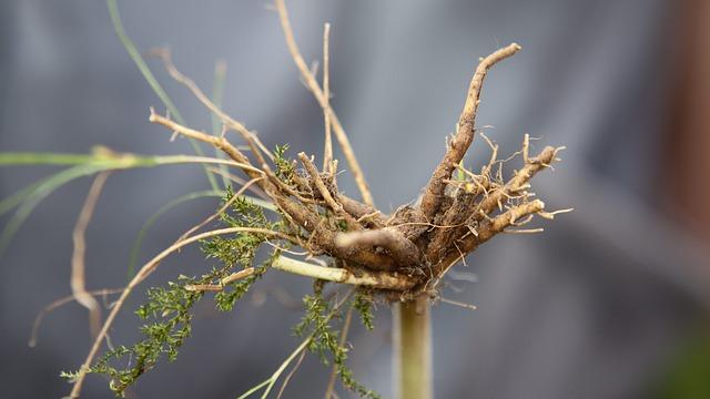 valeriana-officinalis-root-4511906-640.jpg