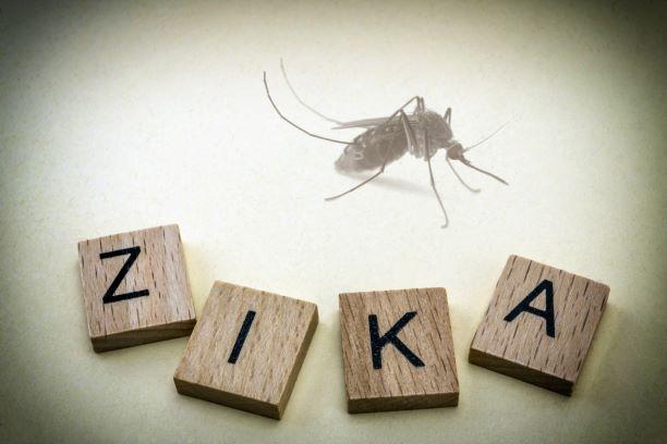 zika-mosquitodreamstime-xl-66529689-thumbnail-resize.jpg
