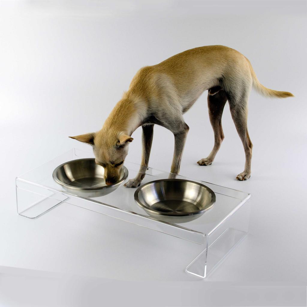 clear-acrylic-raised-dog-feeder-chihuahua