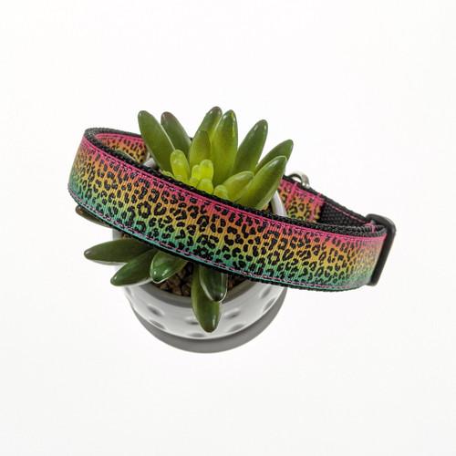Rainbow Leopard Dog Collar (Large)