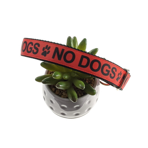 No Dogs Martingale (Large)