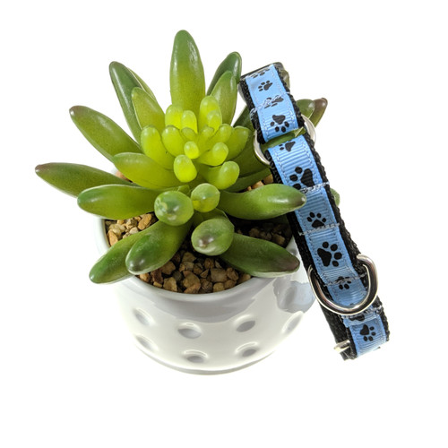 Blue Paws martingale collar (X-Small)