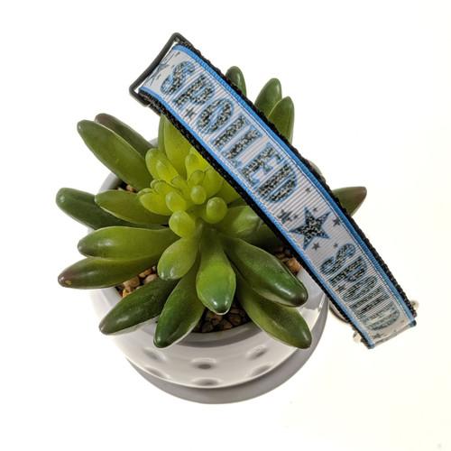 Blue Spoiled Martingale dog collar (Medium)