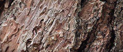 red-bark.jpg