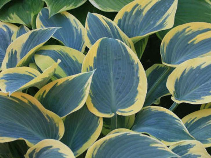 Image Courtesy Walters Gardens, Inc.